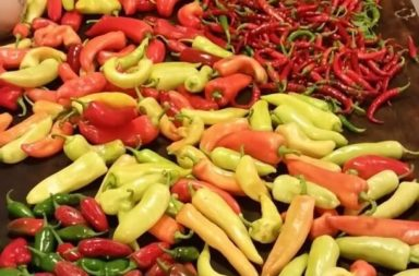 Peppers for Preppers